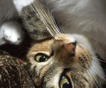 動物の言葉が分かります ペットの気持ちがわからない、どう接するべきか分からない方へ