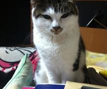 猫の手作りごはんの不安を解消します 手作り猫ごはんのプロがあなたの不安や疑問にお答えします♪