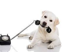 電話で会話しましょう!ALLジャンルいけます この電話で良かったなと思ってもらえるように頑張ります!