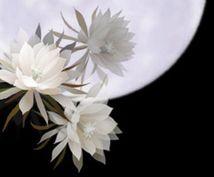 あなたの守護花お伝えします 貴方と伴にある幸運を届けてくれる添花を知りたくありませんか?