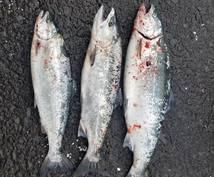 マス釣りをする方必見の簡単で最高のレシピ教えます 釣りは好きでも食べ方の種類があまりなく困っている方必見!