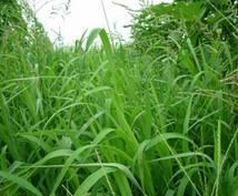 庭や駐車場、山や広場の草を刈ります 庭の草刈りが面倒な方にオススメです