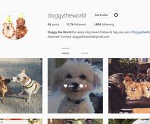 Instagramであなたの写真・動画を投稿します フォロワー30千人!犬がテーマのインスタグラムPRにオススメ