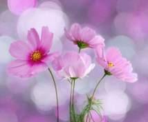 美しい花のエネルギーで本来の自分に気付きHappyに~☆(*⌒▽⌒*)