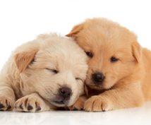 わんちゃん、ねこちゃんの心理を鑑定致します ペットチャネリング☆愛猫・愛犬との関係作りにお役立て下さい