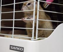 小動物に関するお悩み相談お受けします 飼い方、選び方などなどなんでもお問い合わせください!