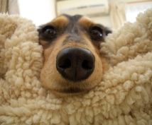 愛犬との生活でお困りの方をメールでお助けします 日常の愛犬のお世話にお困りな方にオススメ♪