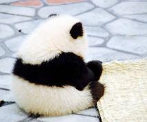 ピタッ!とはまる中国語をお届けします 日中両国の大学を卒業した運営者が丁寧に翻訳