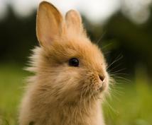 ウサギ・ハムスターの飼い方など色々な相談にのります ウサギ飼いたい人、飼育方法がわからないという疑問に答えます!