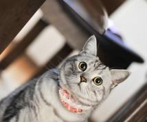 ワンちゃん猫ちゃんついてのコラムを書きます ペット向け情報メディアで執筆経験があります!