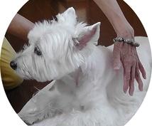 あなたのペットを癒します 獣医師が行うヒーリングで、あなたのペットをリラックス