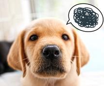 犬の躾けや問題行動の改善方法を教えます 犬についての専門的な知識を分かりやすく教えます。