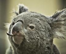 これからワーホリ行く方へ!相談に乗ります オーストラリア歴2年の私が、ワーホリ生活の疑問にお答えします