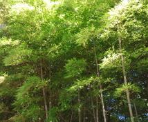 自然エネルギー占い(森林パワー編)