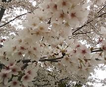 奈良の地元情報を提供します。