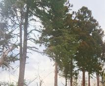 お庭や駐車場など困った木を伐ります 家にある木が大きくなって困っているあなたに。