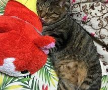 猫の相談等受け付けます 愛猫家、保護猫、初めて猫を飼う方。