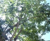庭木の手入れについて、疑問や悩みを解決します 庭園の設計・施工・管理の業務を通じて、適切にアドバイスします