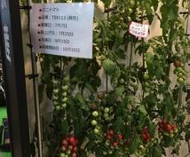 家庭菜園での疑問点、美味しい野菜の作り方、正しい保存の仕方を知って下さい。