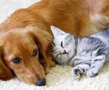 大切なペットとの絆を深める♡アニマルコミュニケーターによるリーディングセッション