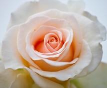 ラジオニクスでバラの花のエネルギーを転送します 生き生きとした花の力で癒されたいあなたへ