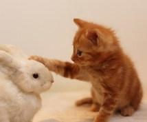 あなたの大切な家族であるペットとお話します ♫ ペットの望みや体調、素直な気持ちを聞いてみませんか?