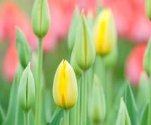 ビジネスタロットをします ビジネスタロットで人生の花を咲かせましょう!