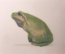動物や人物、風景などのパステル画で描きます 写真を元に自分なりの色合いで、写実的にパステルで描きます!