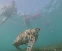 メキシコのユカタン半島へ旅行される方へ、格安観光プランニングのお手伝いをします