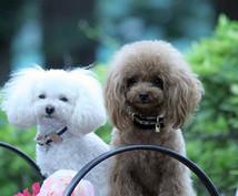 いいトリミングサロンの3つの共通点お教えします プードルの飼い主さまへおすすめ!