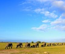 【ゾウ好きの方へ】アフリカ象厳選5枚をお届け致します。