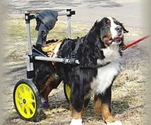女性でも一人で乗せられる大型犬用クルマ椅子