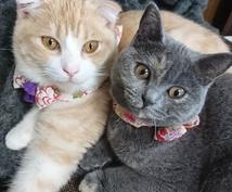 愛猫の写真送ります 猫の可愛い写真に癒されたいかたぜひ!