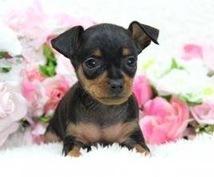 愛犬の出産をサポートします 愛犬の出産を控え心配事や相談等お受けいたします。