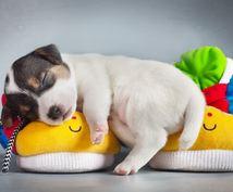 犬のしつけトレーニング方法アドバイスします しつけにお困りの方へペットケアアドバイザーが丁寧にご対応!!