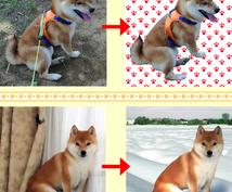愛犬のお写真を合成します さらに可愛く、さらにかっこよく(^^♪