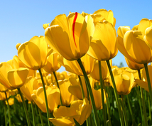 お花を買う日時・方位をお伝えします 花買い開運法。お花を買って飾って幸運に!