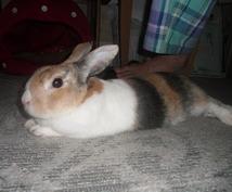 ウサギを飼おうと考えている方へor飼っている方へ、熟練がアドバイスします。