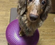 ご愛犬との楽しいしつけ方教室します 【問題行動】ご愛犬との関係性、見直してみませんか?【しつけ】