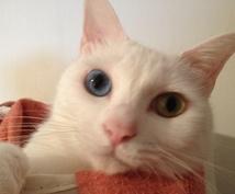 ワンコインで7日間の運勢を占います 占う対象の7日間はお客様が決められます。猫と一緒に占います。