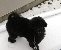 犬のしつけ、飼い方相談お受けします 初めて犬を飼う方、飼っている犬の相談受けます。