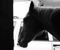 来年は午年、年賀状に使える馬の写真を差し上げます