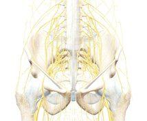 自律神経や首、背骨、骨盤をスッキリさせます 100人限定!身体の不調を感じたらまずコレ!
