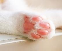 犬や猫のしつけや病気など色々な記事を調べて書きます 自分のブログに犬や猫の記事を載せてみたい方にうってつけです★