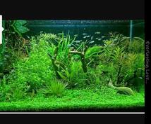 熱帯魚や水草の育てかた教えます 初心者の方でも簡単に丁寧におしえます。