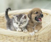 わんこ・にゃんこ なんでもお気軽相談室* 動物病院勤務の動物看護師がお答えします!