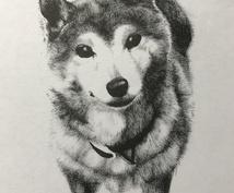 筆ペンで大切なペットの似顔絵を心を込めて制作します 大切なペットなどの肖像画がほしい方へ