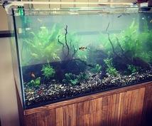 熱帯魚(淡水)水槽の維持管理お手伝いします すぐ汚れてしまう、綺麗に維持したい。何でもご相談ください!