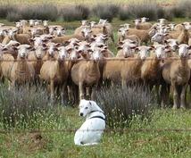 動物さんの気持をお伝えします アニマルコミュニケーションでより良い関係を築いていくお手伝い