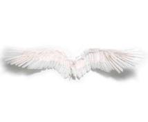 天使からあなたへのメッセージを伝えます 大好評♡今のあなたへのメッセージ♡